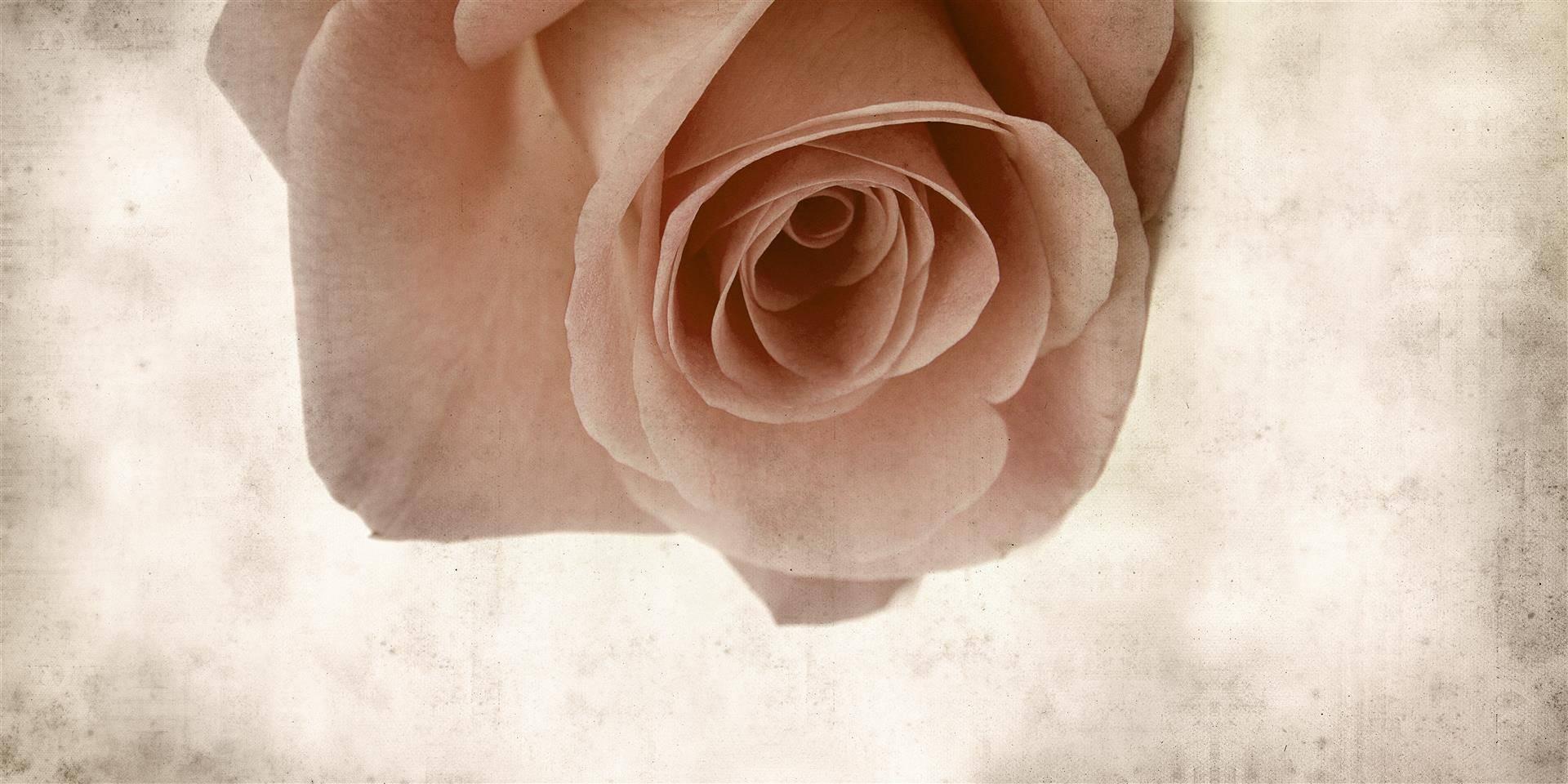 Фото-обои с изображением розы